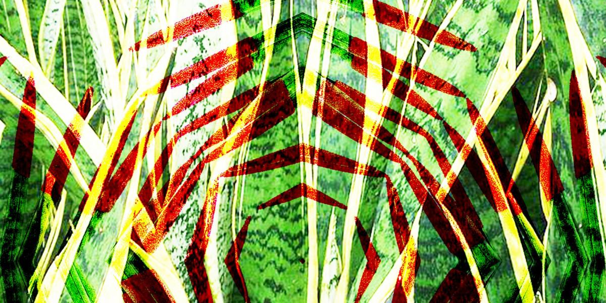 Sansevieria - Plantentuin Meise