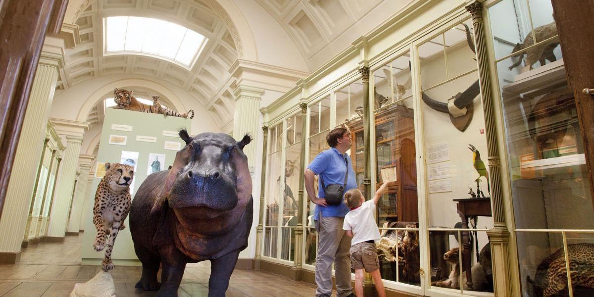 Natuurhistorisch Museum en Vivarium in Doornik